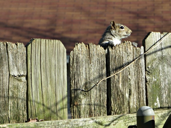 squirrel033014 (1)